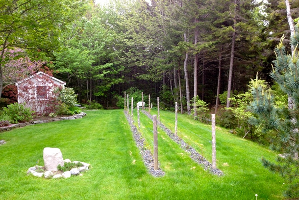 Small Backyard Vineyard romancing the vine | maine island living